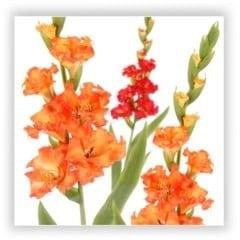 gladiolus silk flower