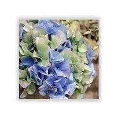 hydrangea silk flower