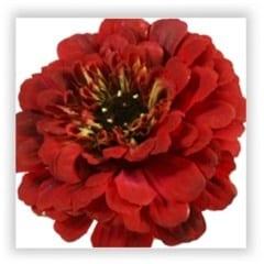 zinnia silk flower