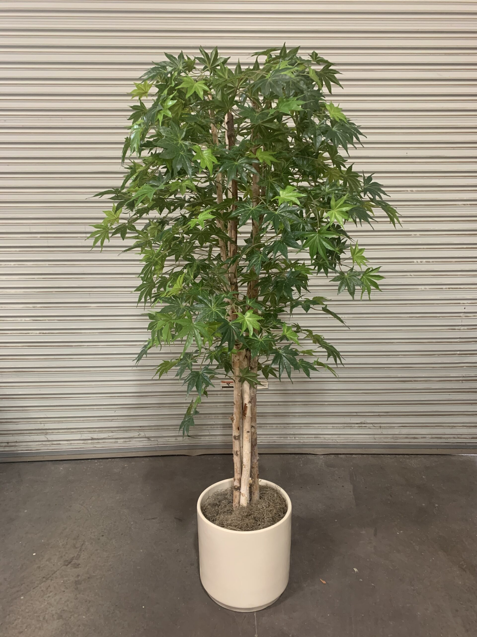 Custom Artificial Japanese Maple