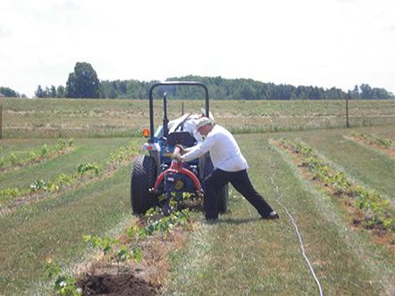 Planting Grapes