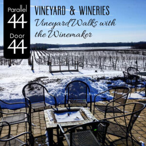 Vineyard Walks with the Winemaker
