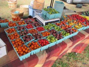 AFM tomatoes