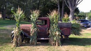 corn-stalks