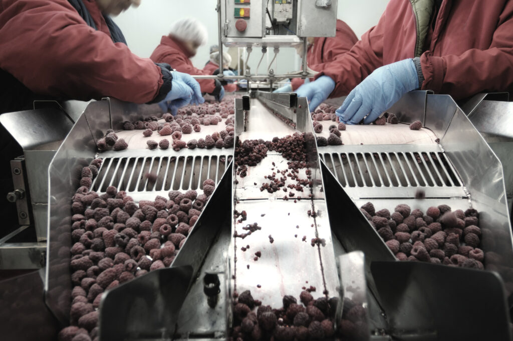 berry processing