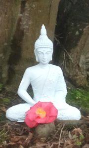 Buddha.garden (2)