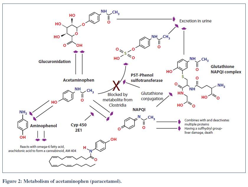 Acetaminophen_Metabolism