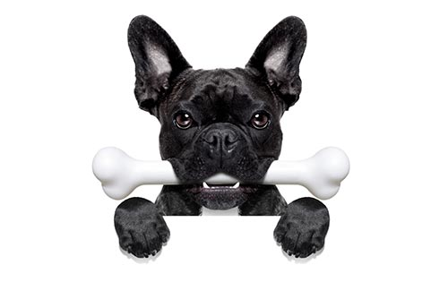 black dog digital marketing campaign
