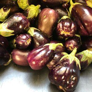 Farm Fresh Eggplant On Sale Near Me