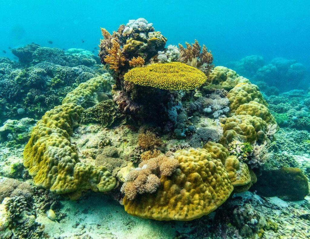 maximiliano bello conservacion oceano