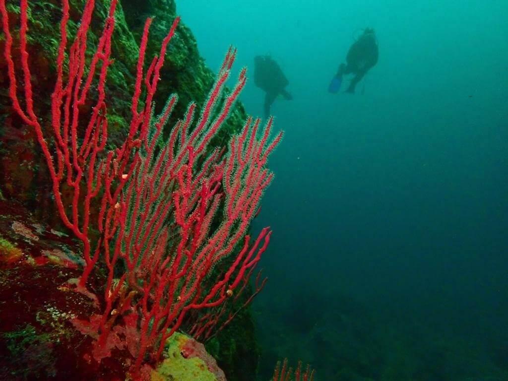 reserva buceo en algarrobo cono sur diving bahari fiestas patrias
