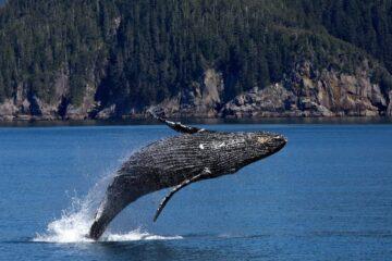 avistamiento de ballenas en chile