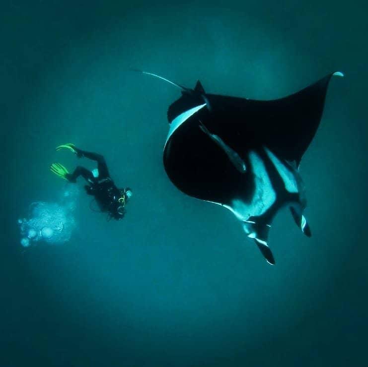 expedicion mantas gigantes ecuador pedro niada oceano