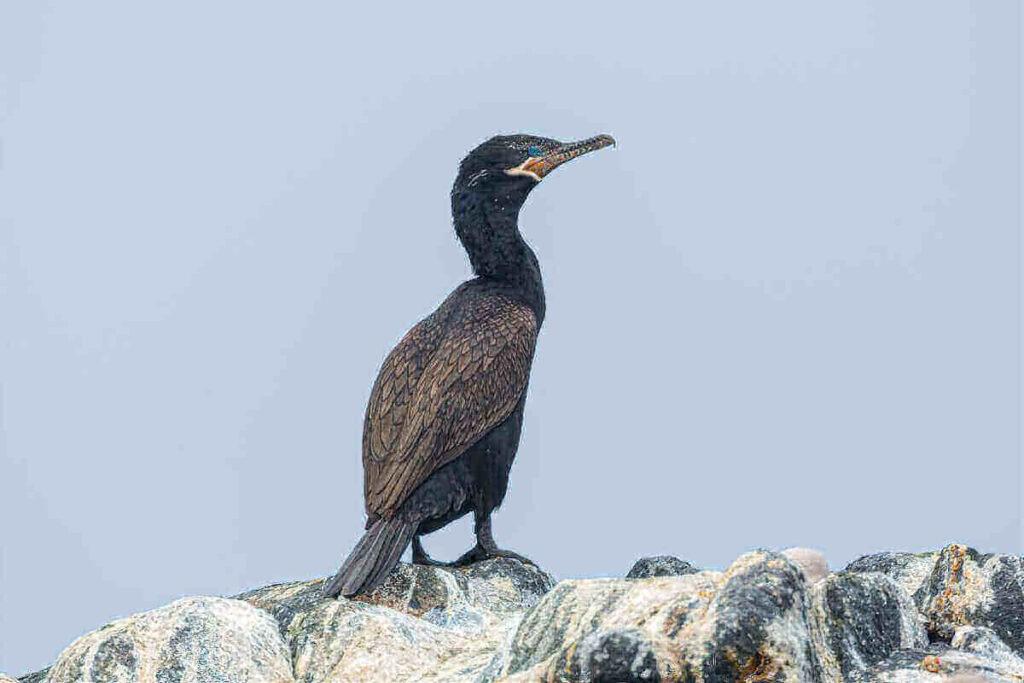 fauna marina en tocopilla region de antofagasta