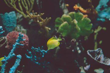 panoramas online documentales peliculas y podcast oceano