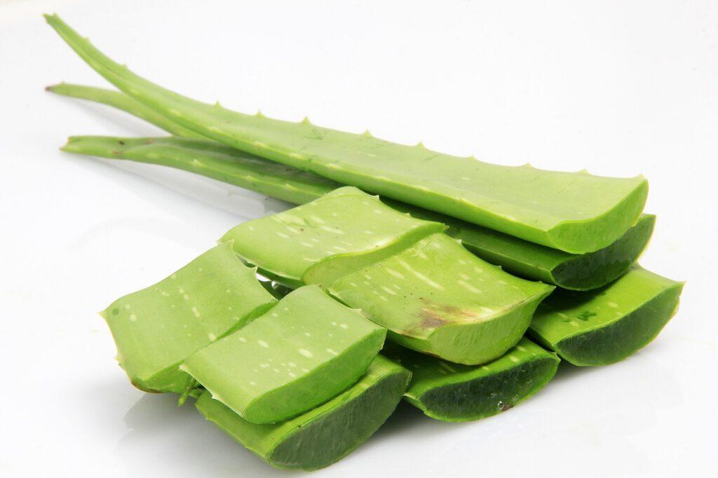 green, leaf, nature-4521833.jpg