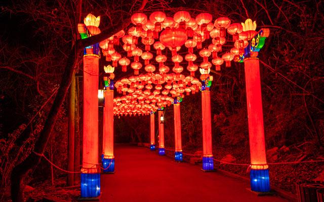 A spotlight look at the Cowabunga Bay Festival of Lanterns