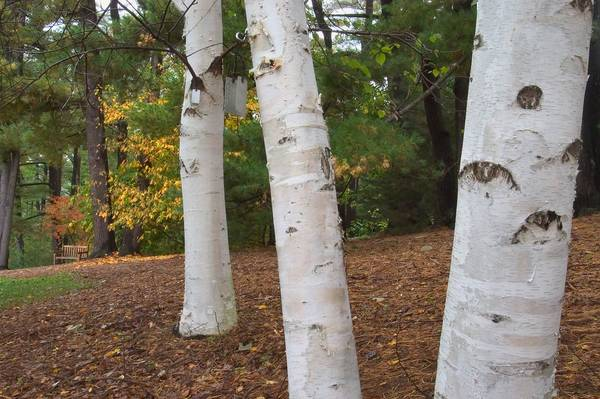 Trees for Systemic Injections