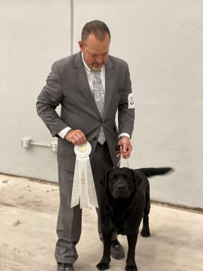 Labrador Best of Breed Win at Dog Show