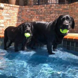 Fancy with puppy Tana playing in the pool