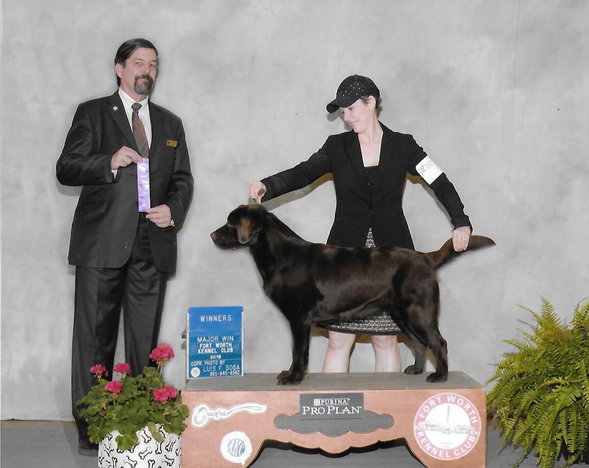 Moka of SEGA Labrador Retrievers