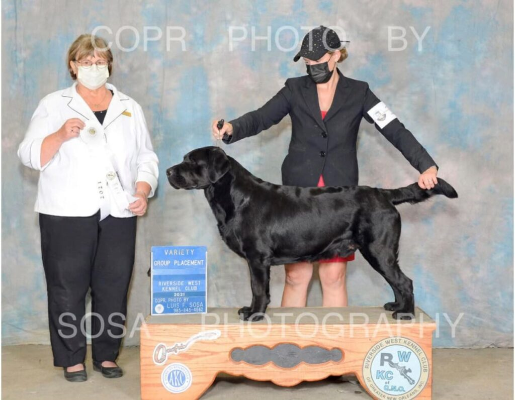 Poncho winning Best of Breed in Louisiana Dog Show Competition hosted by Riverside West Kennel Club.
