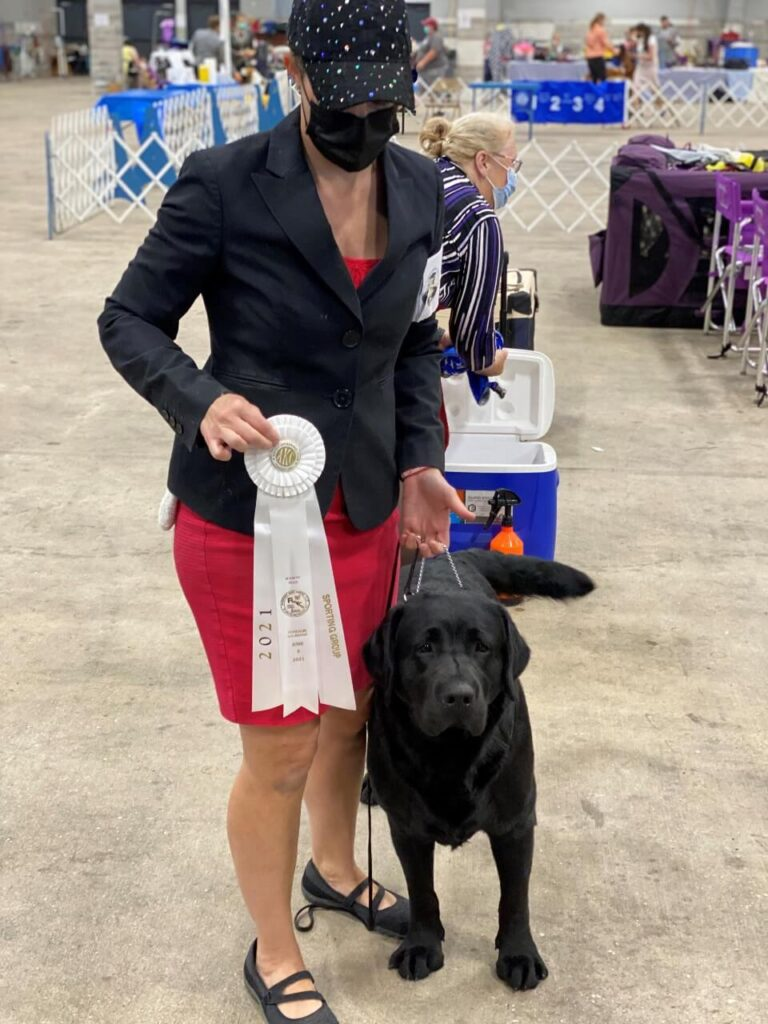 AKC Group 4 Sporting Dog Competition
