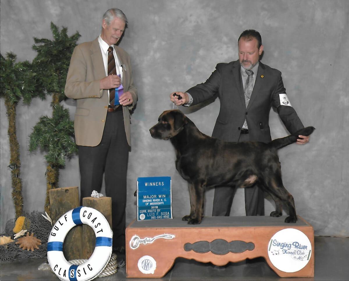 Steam of SEGA Labrador Retrievers at a dog show