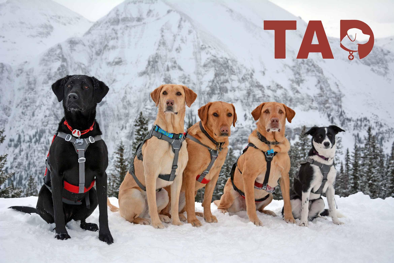 Telluride Avalanche Dogs