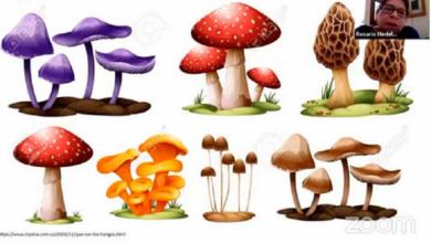 Simbiosis entre hongos y plantas beneficia al ambiente y a las comunidades