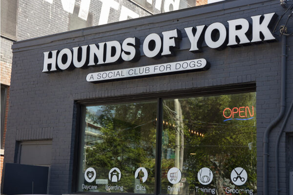 Hounds of York