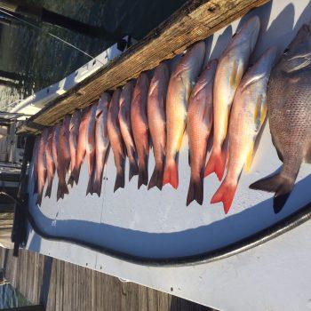 Fishing Marco Island Florida