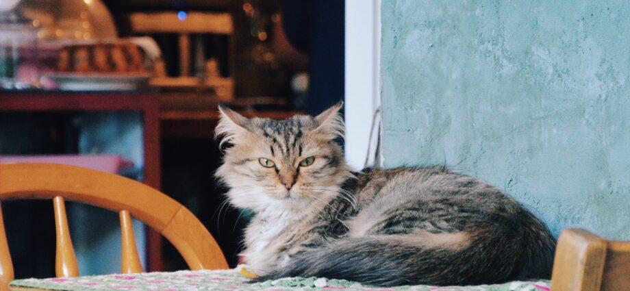 A cat café might make your clients happy