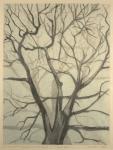 Winter Oak, double cognate