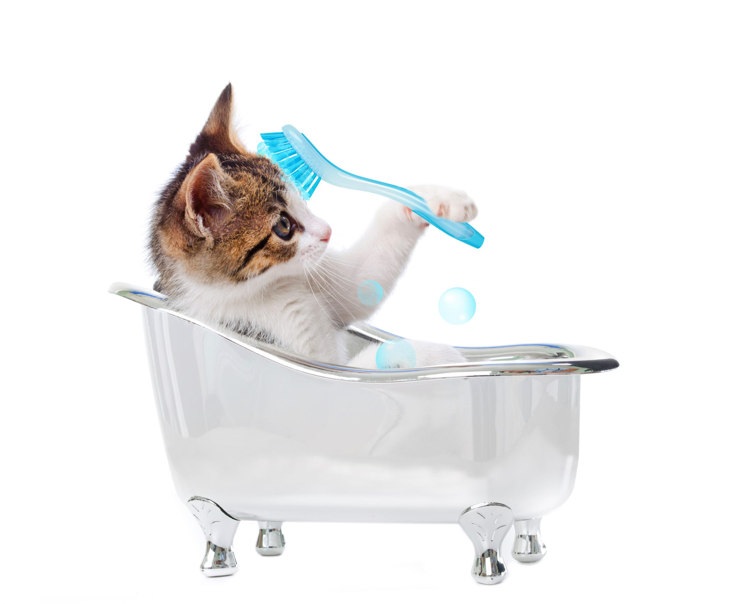 Cat Grooming Indiana