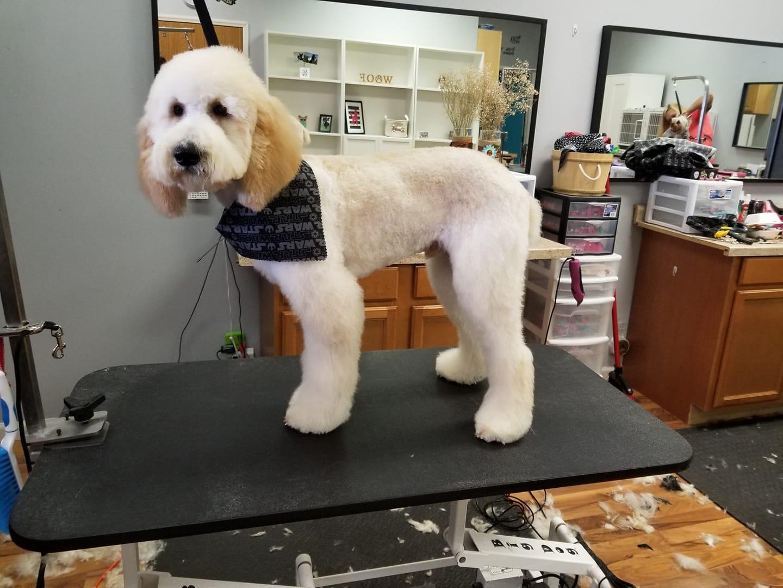 Dog Nail Clipping Indiana