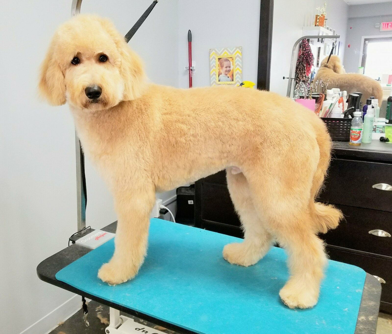 Smoochie Pooch is the Top dog grooming services in Portage