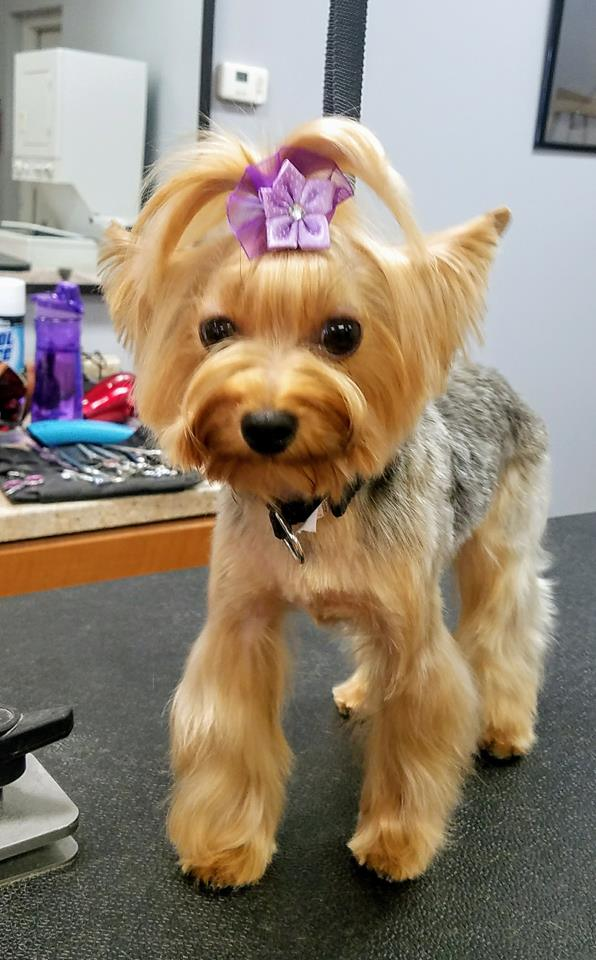 Smoochie Pooch is the Best puppy groomers near Portage area for your cute pets