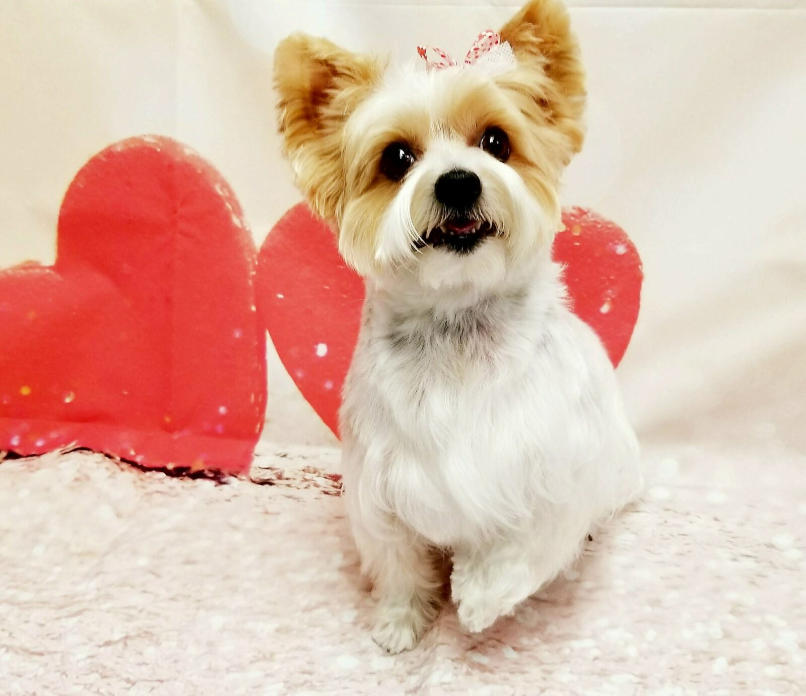 Flea Treatment For Dogs Indiana