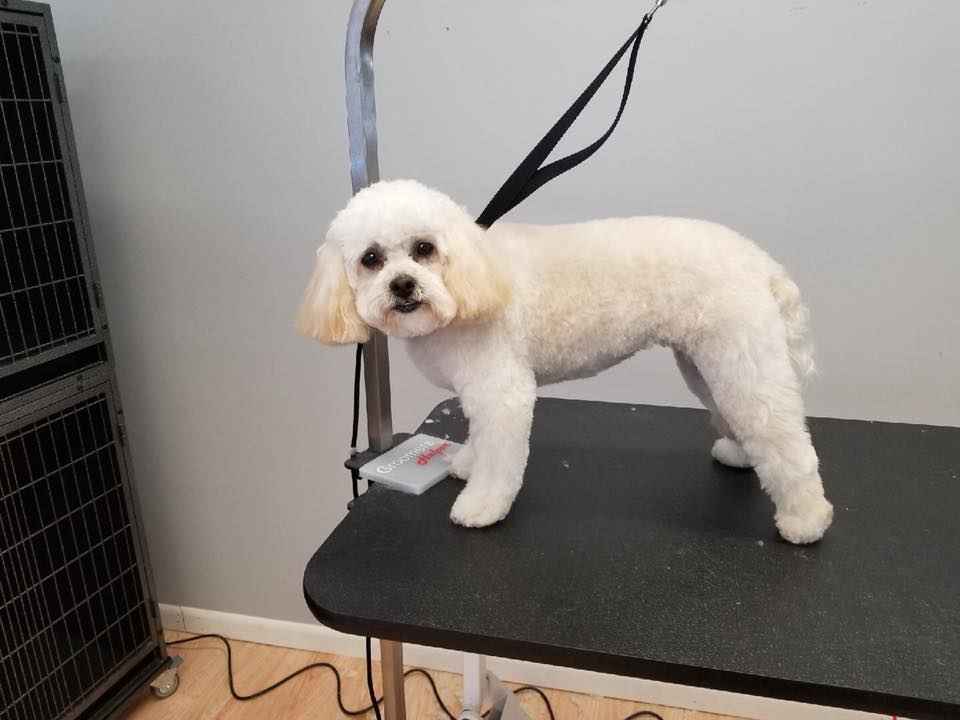 Hire best dog haircut salon in crown point
