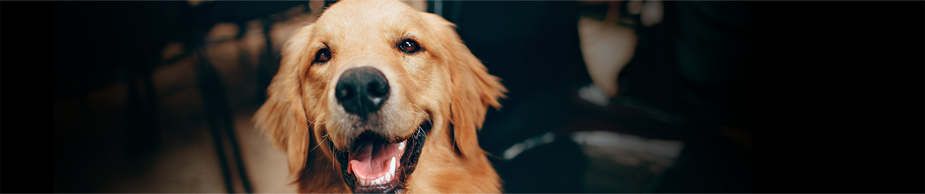 Best dog groomers in Indiana