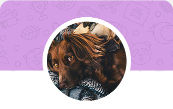 Dog Grooming in Indiana