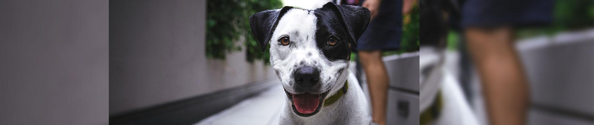 Smoochie Pooch is top dog groomers in Auburn IN