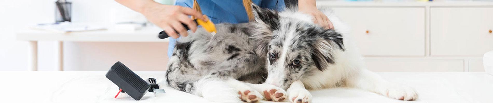 Pet treatment Indiana