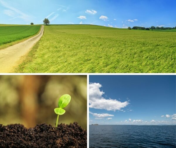 A triptych of images. Green grasses sway on a sunny, breezy day. A bright green plant sprouts from dark, fluffy soil. A sunny day on Lake Champlain.