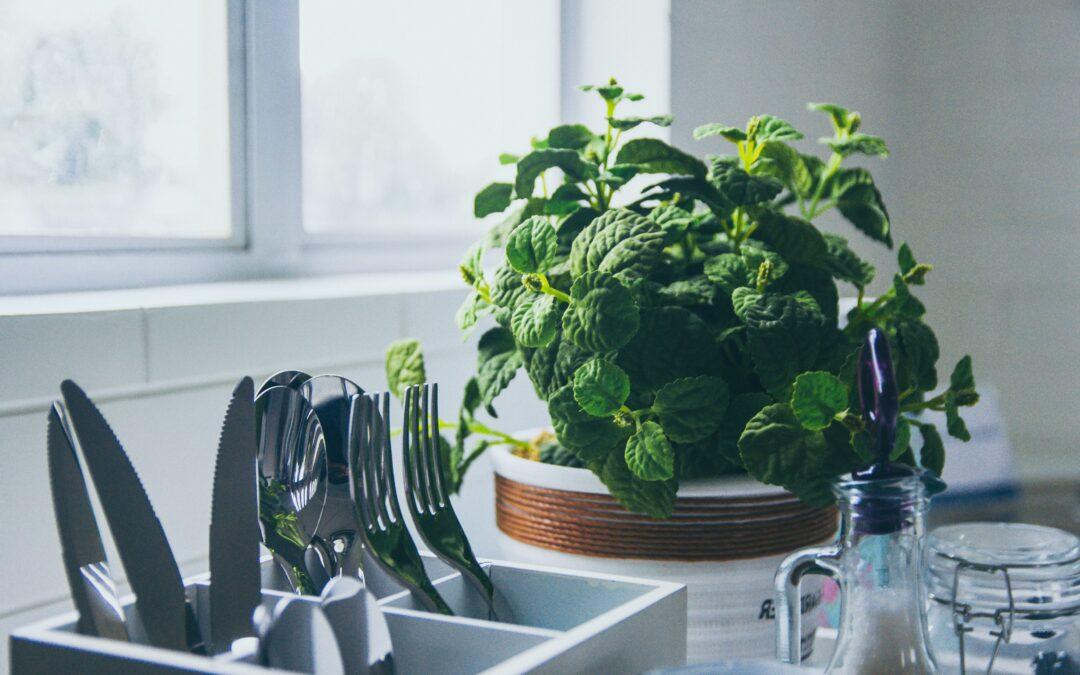 Peppermint Essential Oil – a powerful helper in pest control