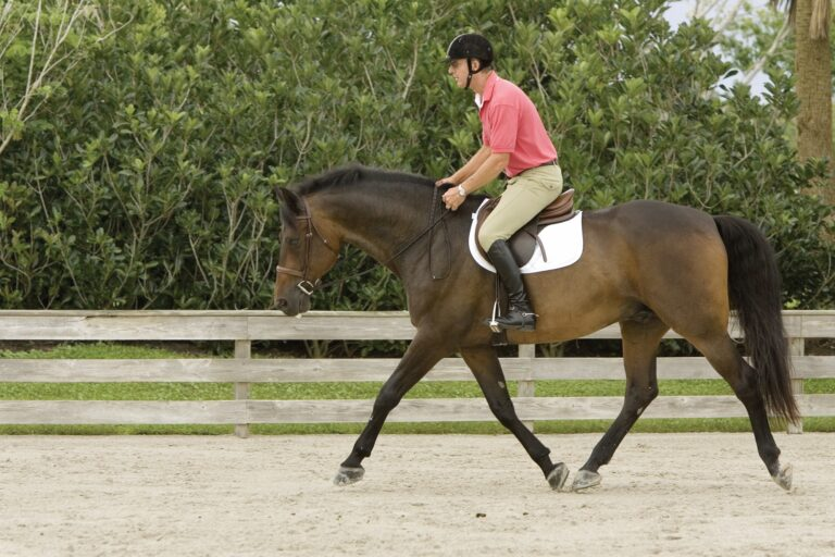 The Plaid Horse – Developing Lightness and Feel: Exercises from Geoff Teall