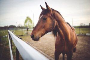 Closeup of horse's head