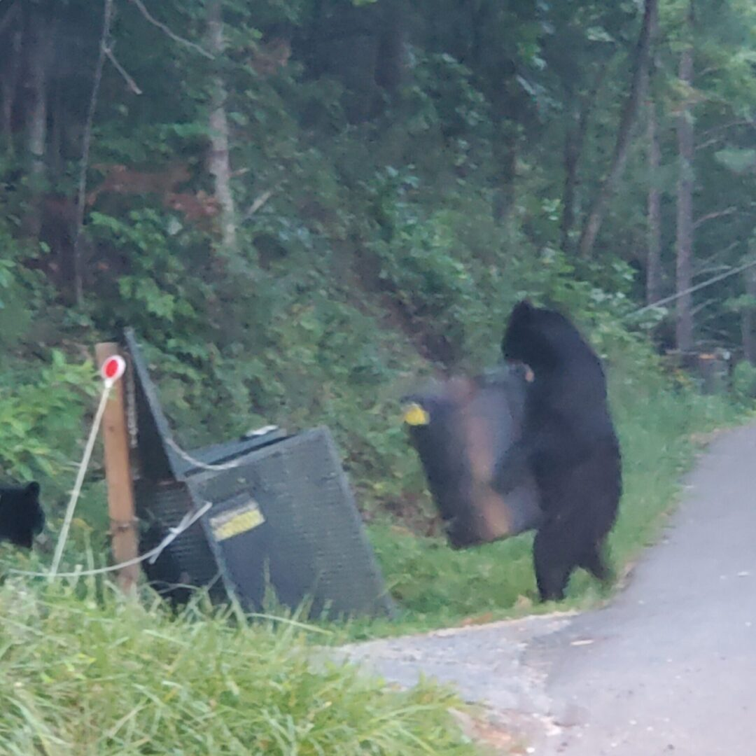 Bear holding trash can