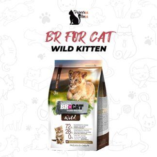 BR FOR CAT WILD KITTEN